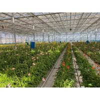 智能升降基质槽-空中草莓栽培系统-智能种植塔-栽培滴灌技术